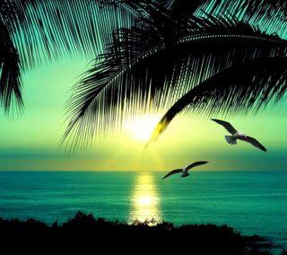 Обои на телефон песок, тропические, рай, приятные, пляж, пальмы, новый, деревья, вода, tropical beach hd