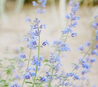 Обои на телефон размытые, цветы, цвести, синие, природа, милые, крошечный