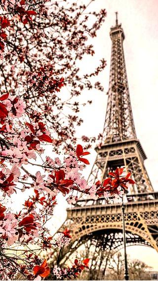 Обои на телефон эйфелева башня, цветы, париж, torre, hd