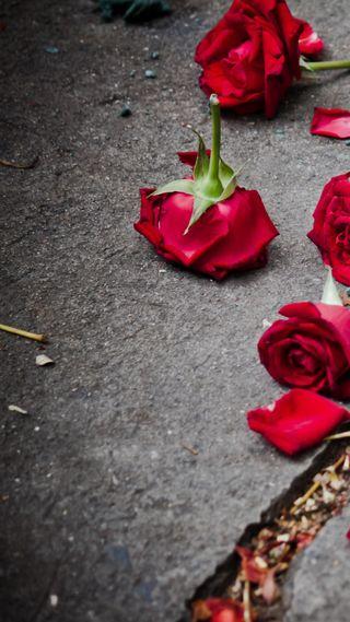 Обои на телефон сломанный, сердце, розы, любовь, красые, love