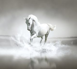 Обои на телефон лошадь, самсунг, галактика, белые, white horse, samsung galaxy s4, 2160x1920