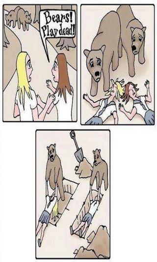 Обои на телефон медведи, мертвый, игра, забавные, девушки