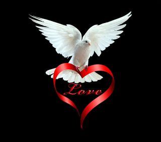 Обои на телефон мир, сердце, романтика, любовь, голубь, love and peace, love