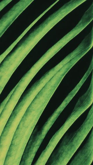 Обои на телефон мягкие, растения, простые, природа, натуральные, листья, линии, зеленые, естественные, green leaf