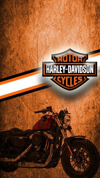 Обои на телефон харли, байкер, оранжевые, мотоциклы, девушки, scroggins, hog