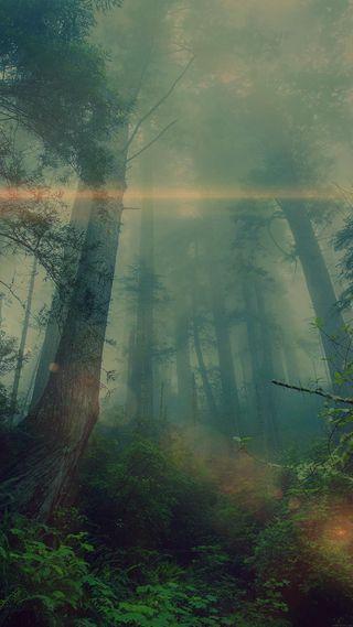 Обои на телефон туман, солнечный свет, природа, лес, fog in forest