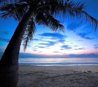 Обои на телефон восход, тропические, пляж, пальмы, океан, море