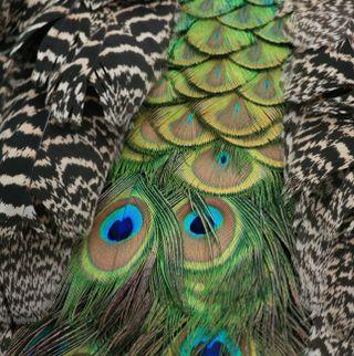 Обои на телефон перья, цветные, приятные, перо, новый, лучшие, крутые, животные