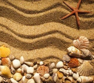 Обои на телефон раковина, песок, пляж, морская звезда, лето
