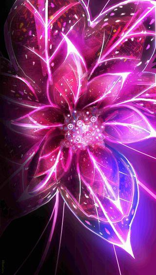 Обои на телефон валентинка, цветы, романтика, розы, неоновые, день, neon flower