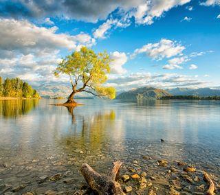 Обои на телефон дерево, природа, озеро, небо, кристалл, вода, hdr