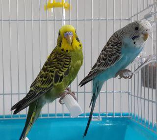 Обои на телефон птицы, попугаи
