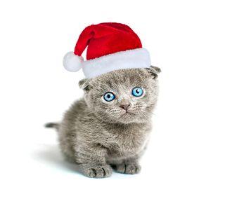 Обои на телефон счастливое, санта, рождество, милые, кошки, котята