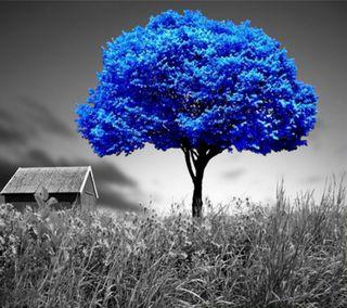 Обои на телефон ок, синие, приятные, природа, крутые, красота, классные, дерево, вид