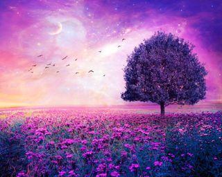 Обои на телефон птицы, цветы, фиолетовые, природа, поле, пейзаж, небо, луна, космос, деревья, purple nature