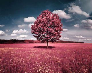 Обои на телефон трава, розовые, природа, поле, пейзаж, облака, листья
