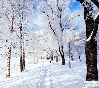 Обои на телефон лед, снег, зима, дерево, день, snow day