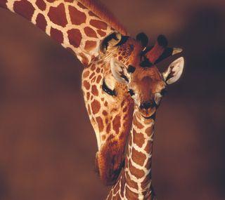 Обои на телефон мама, giraf and mom