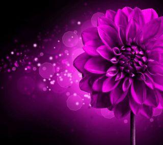 Обои на телефон цветы, фиолетовые, свет, 2160x1920px, purple flower, dhalia