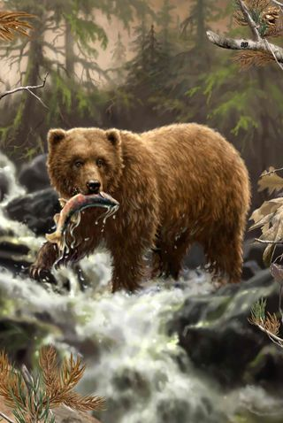 Обои на телефон рыба, ручей, медведь, дикие