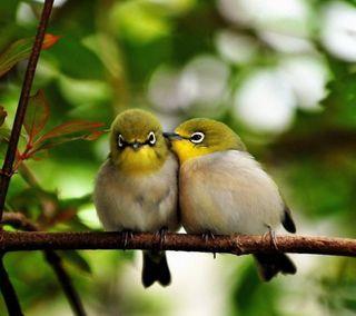 Обои на телефон питомцы, птицы, милые, животные, cute birds