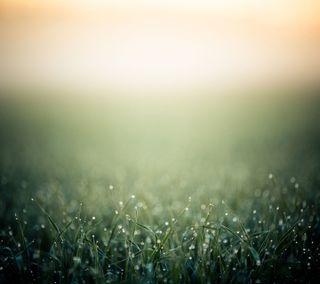 Обои на телефон утро, трава, роса, природа, поле, пейзаж, morning dew, land