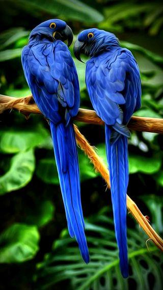 Обои на телефон фрактал, синие, рай, попугаи