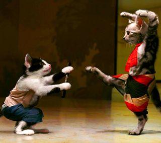 Обои на телефон кошки, забавные, karate