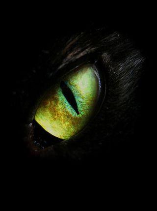 Обои на телефон глаза, волк, gfv, eye wolf