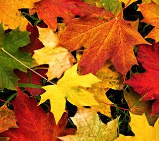 Обои на телефон осень, листья, желтые, красые, зеленые, clorous
