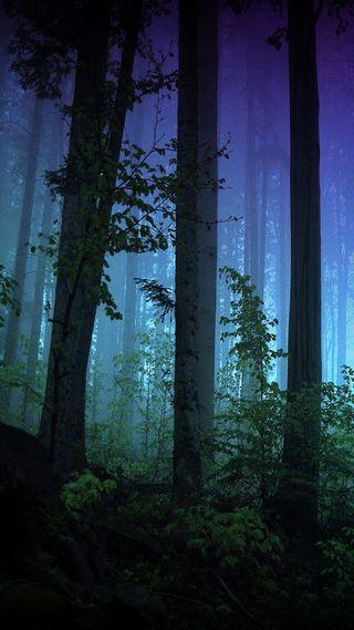 Обои на телефон трава, темные, растения, приятные, природа, новый, лес, естественные, деревья, hd