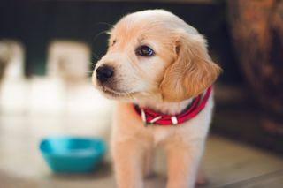 Обои на телефон щенки, собаки, милые, cute puppy
