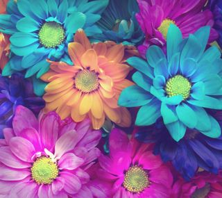 Обои на телефон лепестки, цветы, красочные