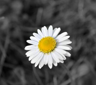 Обои на телефон весна, цветы, colourkey
