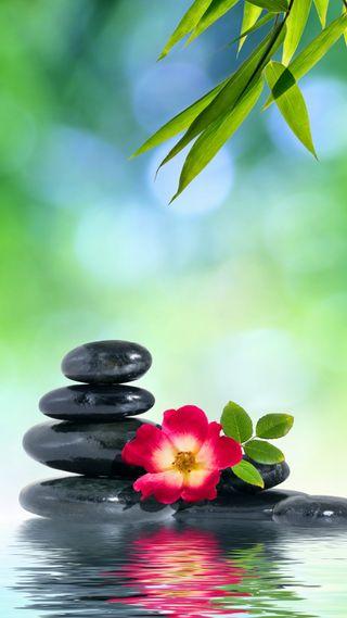 Обои на телефон дзен, черные, цветы, спа, расслабляющие, природа, красые, зеленые, вода