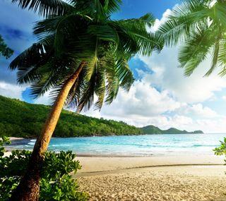 Обои на телефон пляж, пальмы, океан, море, деревья, thailand
