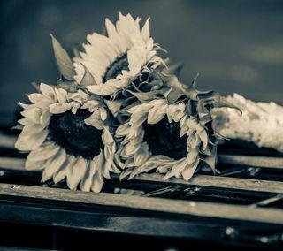 Обои на телефон элегантные, цветы, солнце, свадьба, подсолнухи, любовь, жизнь, жена, perfect, msls, love