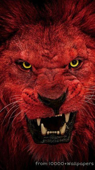 Обои на телефон король, лев, красые, red lion