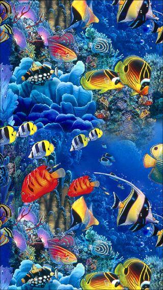 Обои на телефон рыба, подводные, море