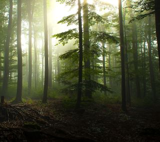 Обои на телефон лес, дерево