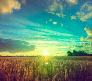 Обои на телефон пшеница, германия, поле, пейзаж, небо, закат, wheat field
