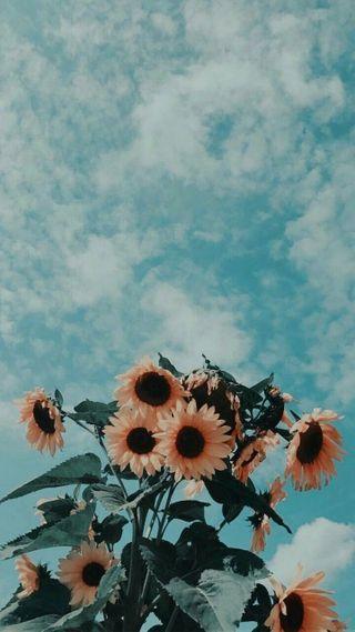 Обои на телефон подсолнухи, цветы