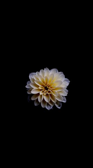 Обои на телефон лотус, эпл, цветы, природа, прекрасные, лучшие, белые, али, абстрактные, white flower ds ali, hd, apple