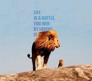 Обои на телефон цитата, мудрые, милые, малыш, любовь, лев, крутые, классные, жизнь, sreefu, love, lomo, life quote hd
