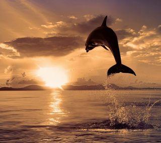 Обои на телефон прыгать, дельфины, восход