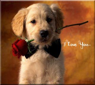 Обои на телефон щенки, ты, собаки, розы, прекрасные, милые, любовь, животные, love, i love you, 3д, 3d, 2012