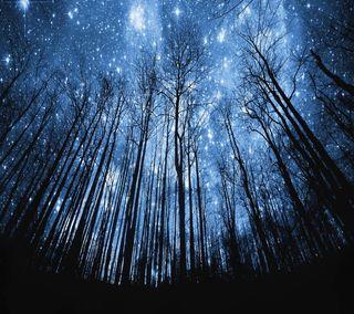Обои на телефон дерево, ночь, небо, лес, звезды, звезда, forest stars