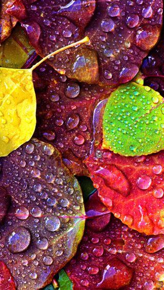 Обои на телефон мокрые, листья, дождь, rain on leves, collor