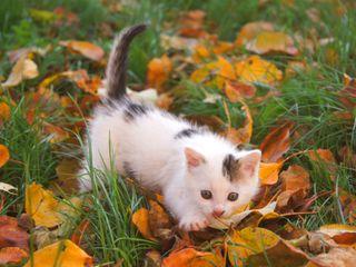 Обои на телефон питомцы, милые, котята, животные, kitty cute