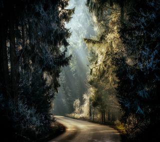 Обои на телефон свет, лес, дорога, hoarfrost